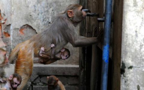 Животные в новостях (2)