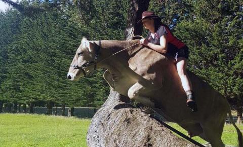 Новозеландская девушка на спор научила корову премудростям спортивной верховой езды