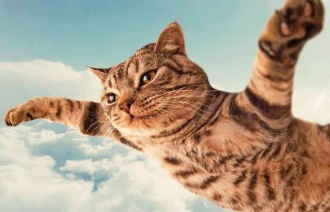 Места на Земле, где кошки чу…