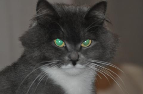 Дрессированный кот Федор