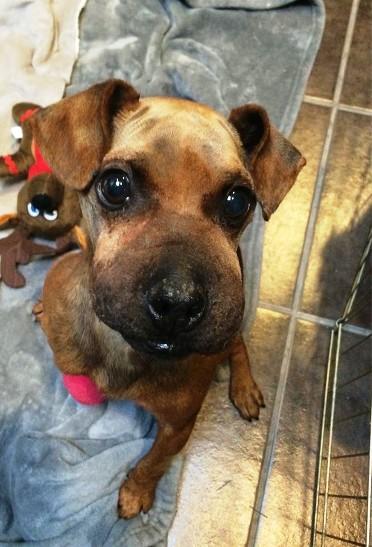 Живодер, который обрек эту милейшую собачку на жуткую смерть, получил по заслугам