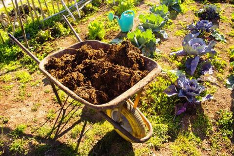 Средства для плодородия. Чем обогатить почву на участке