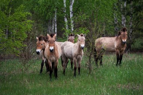 Животные правят Чернобылем п…