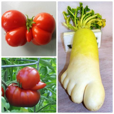 А кто из Вас видел овощи и ф…