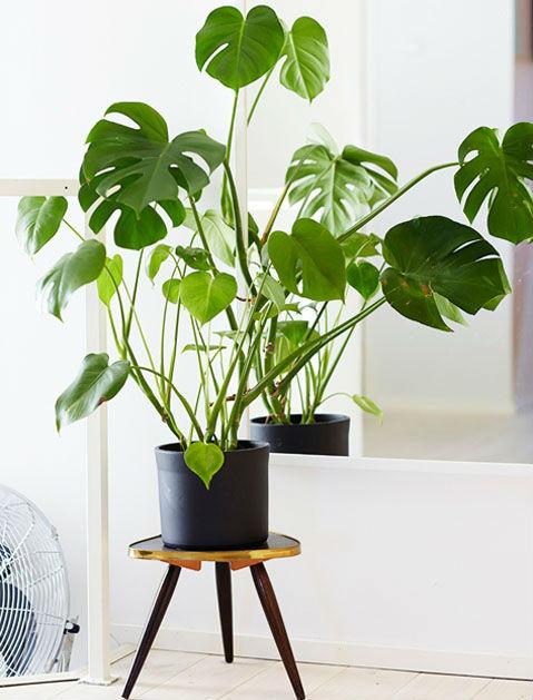 7 домашних растений, которые не убить плохим уходом