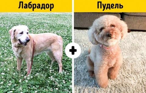 Породы собак, о которых никт…