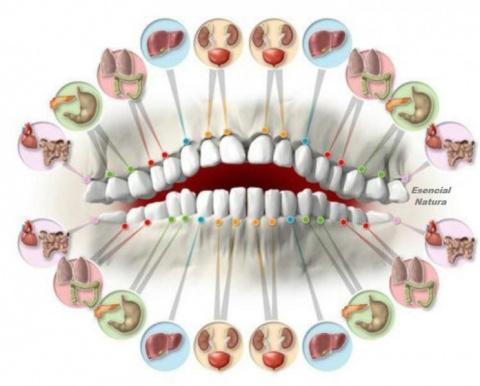 ХИЖИНА ЗДОРОВЬЯ. Читаем по зубам о болезнях