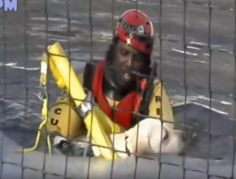 Подборка потрясающих случаев спасения животных