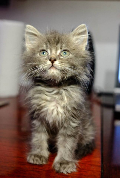 Помогите, пожалуйста, котятам!!!!!