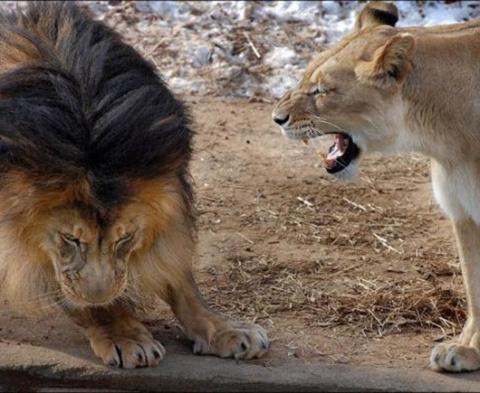 Кто тут царь зверей?!