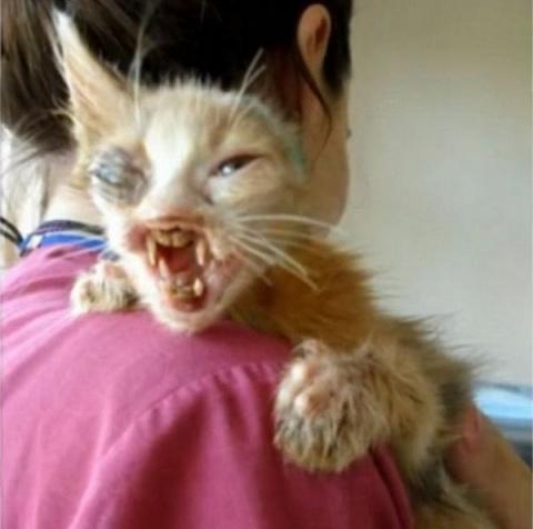 На этого изуродованного коте…
