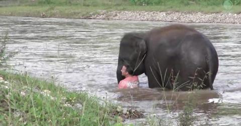 В таиланде слон кинулся спасать смотрителя, который сделал вид, что тонет
