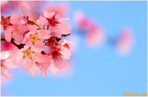 Топ -10 самых красивых цвето…