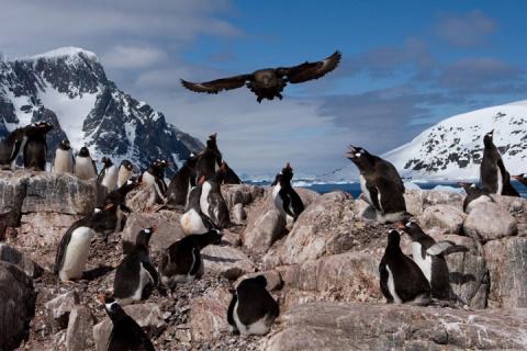 Фото. Суровая жизнь в Антарк…