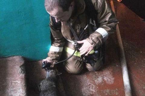В Астрахани спасатель отдал свою кислородную маску пострадавшей на пожаре кошке
