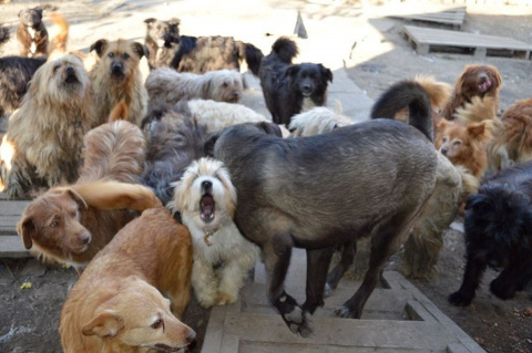 150 собак могут уничтожить как «малоценное имущество»