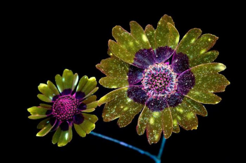Фотографии цветов, освещённы…