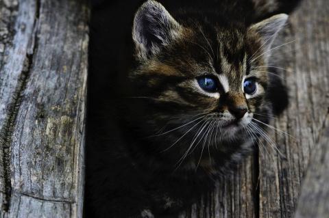 В Калининграде водитель остановился посреди трассы, чтобы спасти котенка