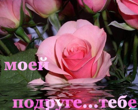 роза моей подруге