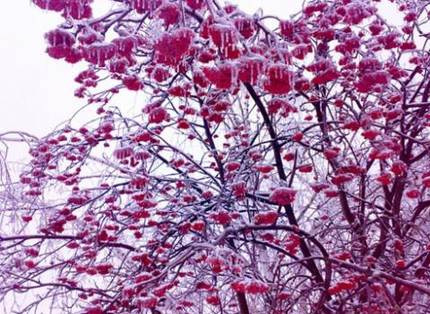 Ледяной дождь: что делать на участке