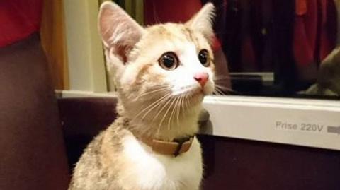 Потерявшийся котенок вернулся домой на поезде