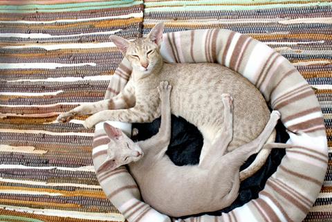 Замечательная история о том, как кот наладил личную жизнь своего хозяина