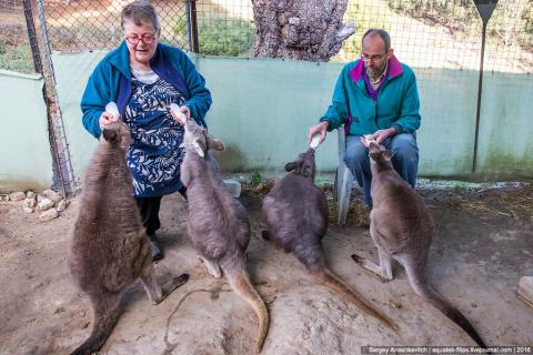 Детский дом для кенгуру