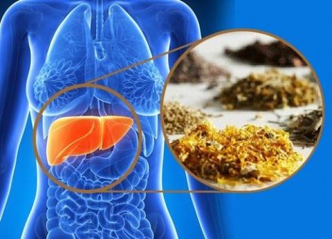 Лекарственные травы, которые помогут очистить печень