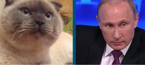 Барнаульский кот Барсик намерен баллотироваться в президенты России