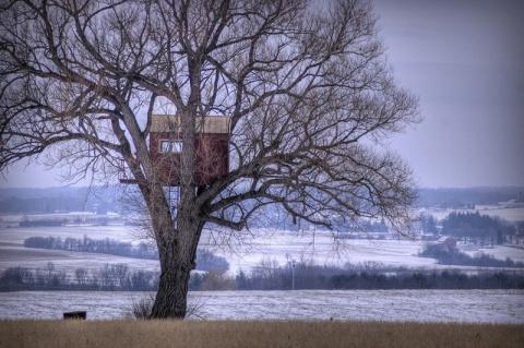 Домики на дереве со всех уголков планеты