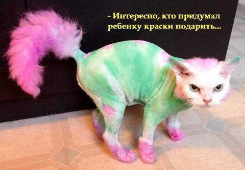 Маленькие истории котов в картинках