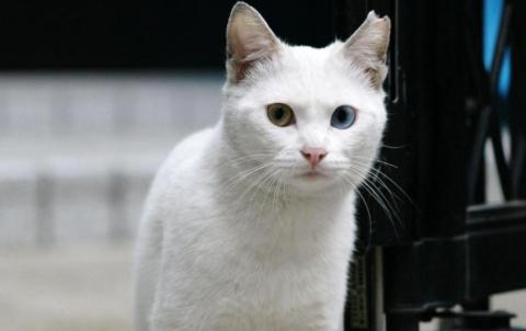 Кот медленно, словно удивляя…
