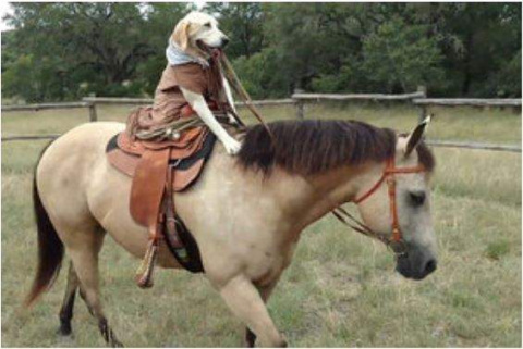 Техасская собака научилась е…