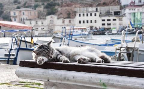 Бедные, голодающие коты Балаклавы