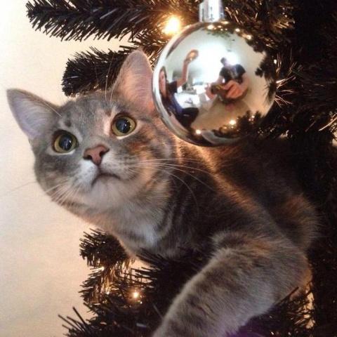 Коты и елка