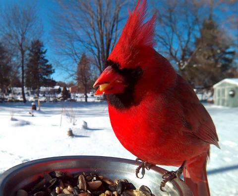 Женщина прикормила птиц и де…