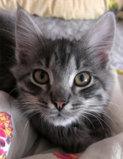 Как 2-летний ребенок котенка спас