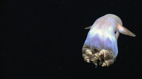 Ужасные обитатели морских гл…