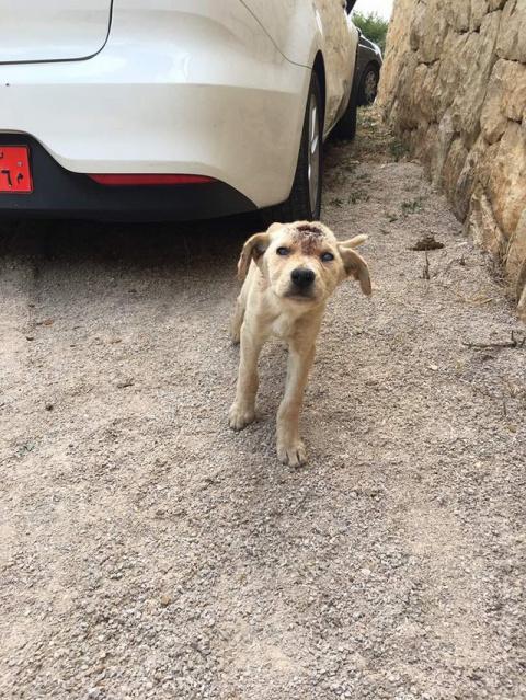 Спасатели были шокированы увидев этого щенка на улице. Но сделав рентген — не поверили своим глазам