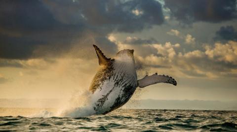 Подборка красивейших фотографий дикой природы