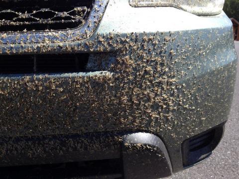 Как защитить машину от насекомых и камней на трассе