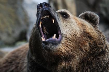 На Сахалине охотник спас сына от медведя