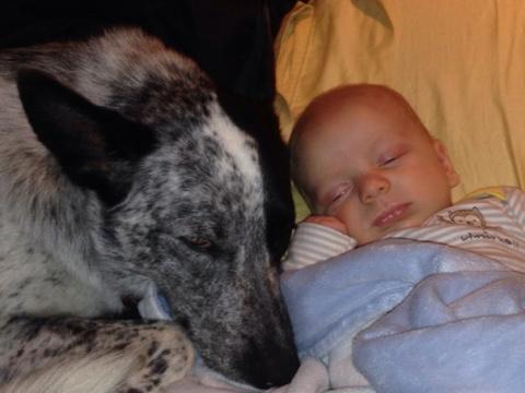 Малыши и их собачки