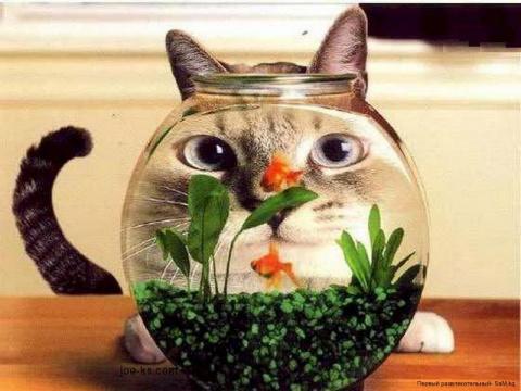 Ну, и снова коты!!!