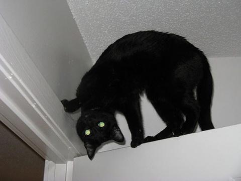 50 случаев, когда кошки случайно показали темную сторону своей личности