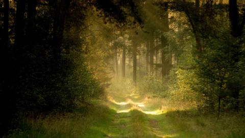 Дорога в рай... Проклятье внутренней цензуры