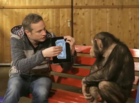 Этому шимпанзе показали фокус с планшетом. Его реакция бесподобна!