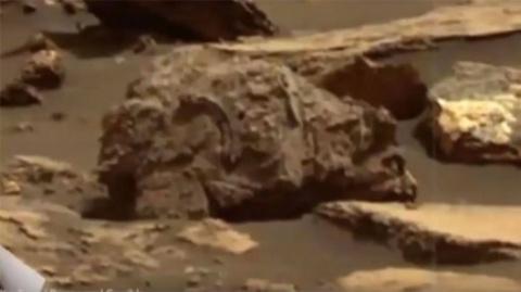 Окаменелый медведь гризли обнаружен на снимках NASA с Марса