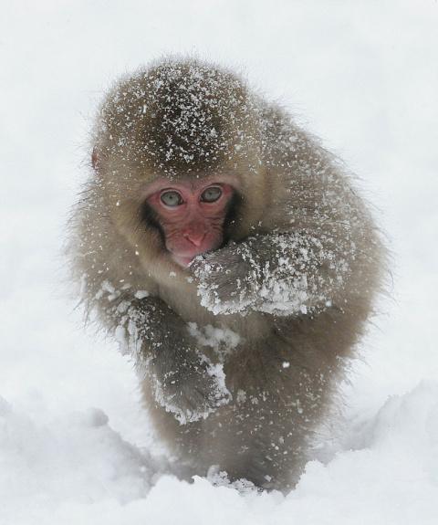 Вот на кого мы похожи, когда приходят морозы...