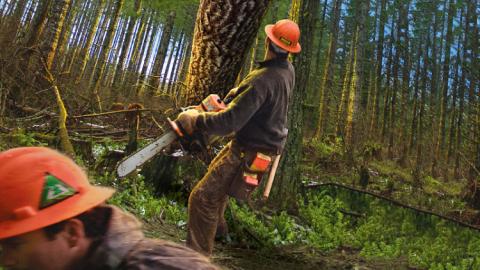 Украину заставили вырубать лес ради транша ЕС